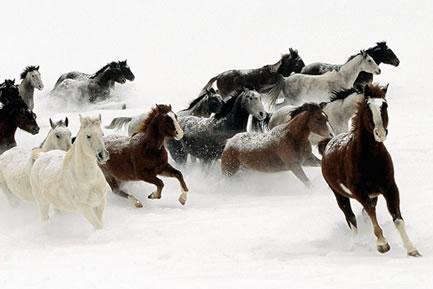 关于马的诗句