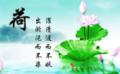 描写芙蓉花的诗句-描写芙蓉花的句子